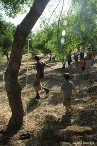 in the ash tree grove